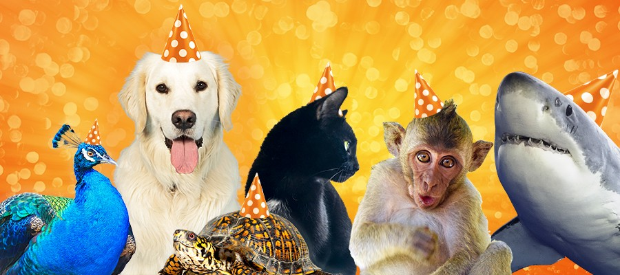 What Kind of Party Animal Are You?